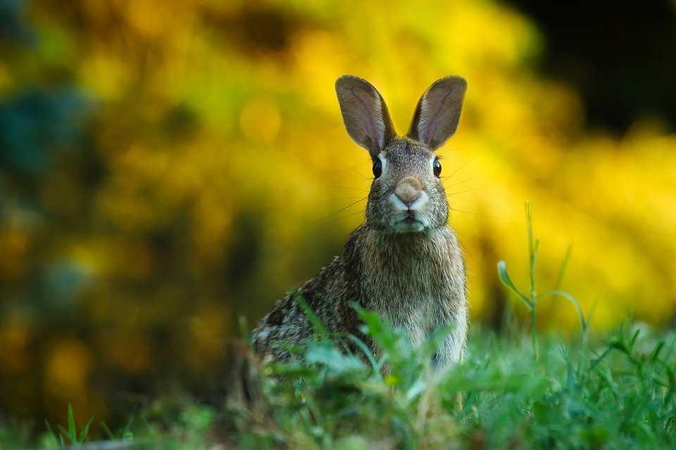 que come el conejo