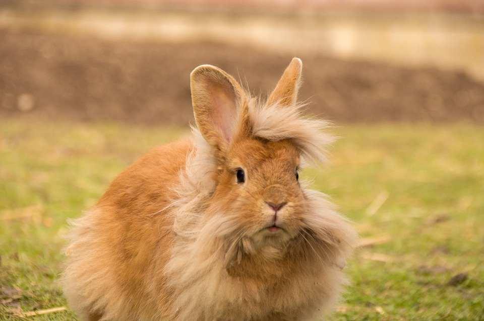 que come conejo cabeza