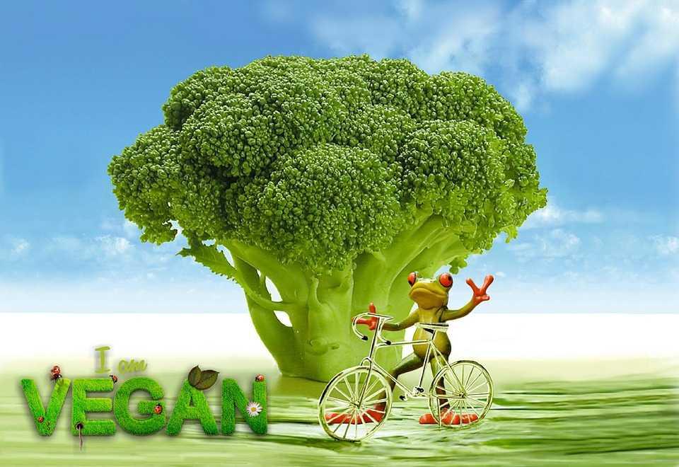 alimentos veganos